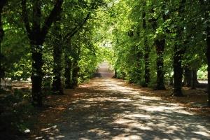 Paseo de los Tilos. Jardín botánico de Coimbra (Portugal)
