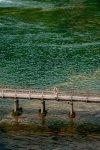 Meditación sobre el puente