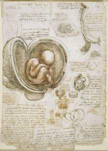 leonardo-da-vinci-anatomia-feto