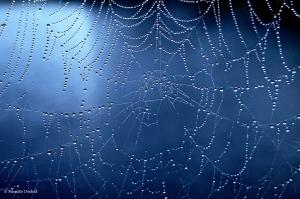 Para los Upanishads, el Universo es como la tela de una araña
